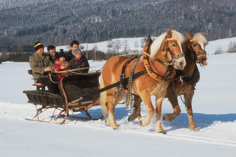 Pferdeschlitten - Vortuna Gesundheitsresort Bad Leonfelden